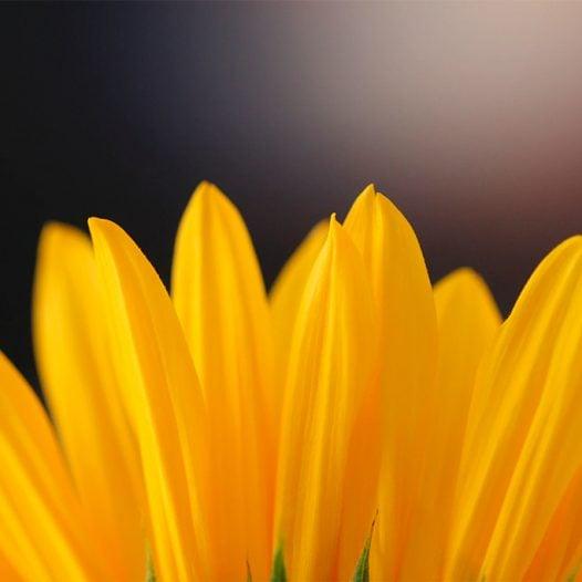 La neurociència de l'optimisme: emocions, motivació i repte